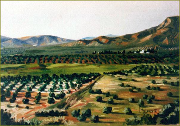 Campo de olivos (Jaén). Óleo sobre lienzo